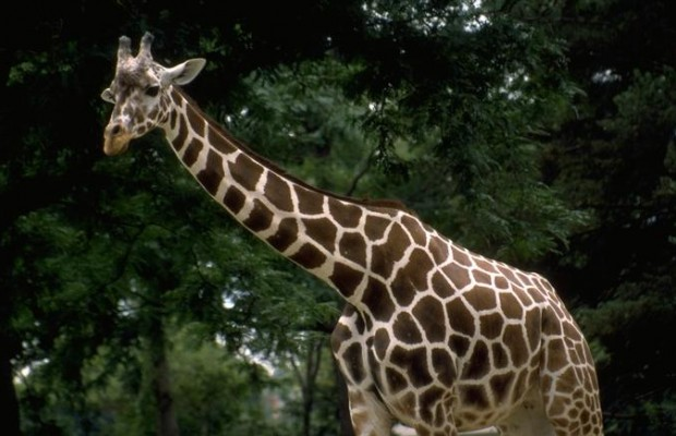 $20,000 Charged to Blank Park Zoo Credit Card